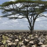 Where to see the Great Migration in Tanzania
