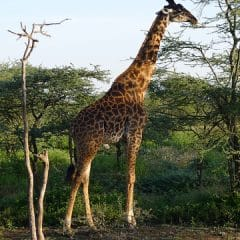 Why Serengeti National Park Is a Must for Your Next African Adventure