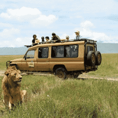 How to Feel Safe on a Safari