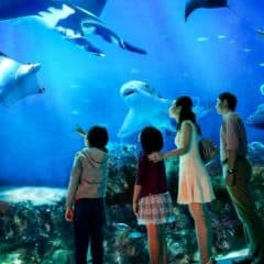 Best Cheap Things to Do in Singapore with Children